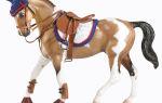 Учимся мастерить самостоятельно аксессуары для лошади – всё о домашней птице