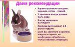 Что можно давать кроликам: самые частые вопросы – всё о домашней птице