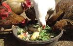 Выбираем поросенка мясной породы — всё о домашней птице