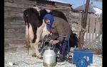 Если есть у вас лошадь: учимся правильно ухаживать – всё о домашней птице