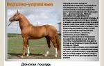 Выбираем хорошего помощника: упряжные породы лошадей – всё о домашней птице