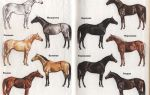 Масть лошади – самый главный наследственный признак – всё о домашней птице