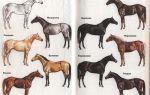 Разнообразие окрасов лошадей: разбираем масти – всё о домашней птице