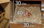 Гнездо с яйцесборником: как сделать? — всё о домашней птице