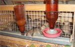 Мастерим кормушки и поилки для перепелок – всё о домашней птице