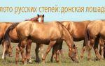 Выносливая красавица из глубины казачьих степей — донская лошадь – всё о домашней птице