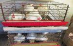 Овечий бизнес: основы ведения хозяйства – всё о домашней птице
