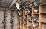 Делаем дом для голубей своими руками – всё о домашней птице