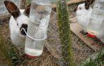 Кормление цыплят и кур-бройлеров от «а» до «я» – всё о домашней птице